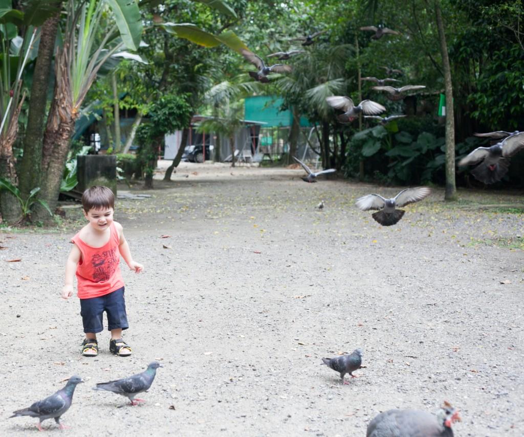 The Animal Resort - birds