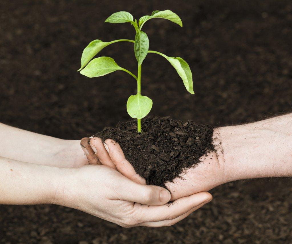 adoption stories -seedling