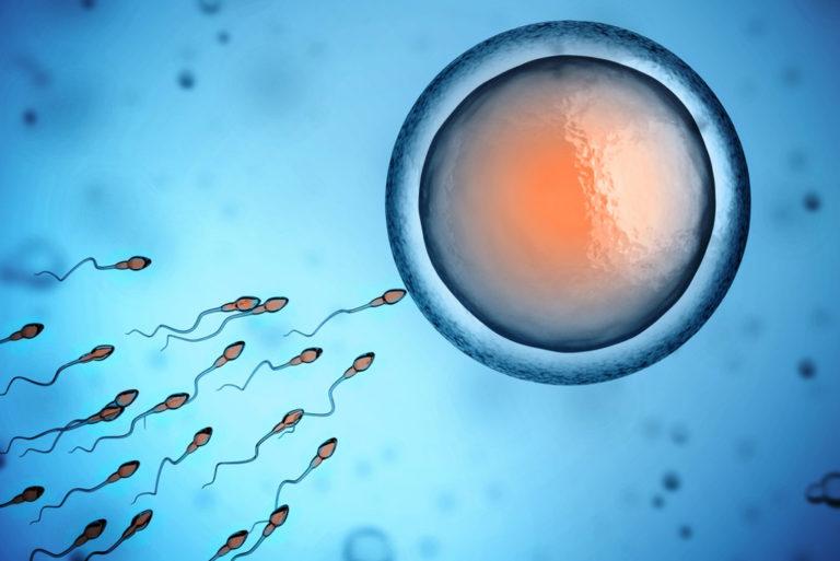 amazing things - egg-sperm