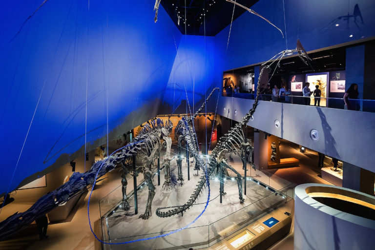 annual family passes - lee kong chian natural history museum